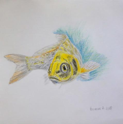 dessin crayon Armana